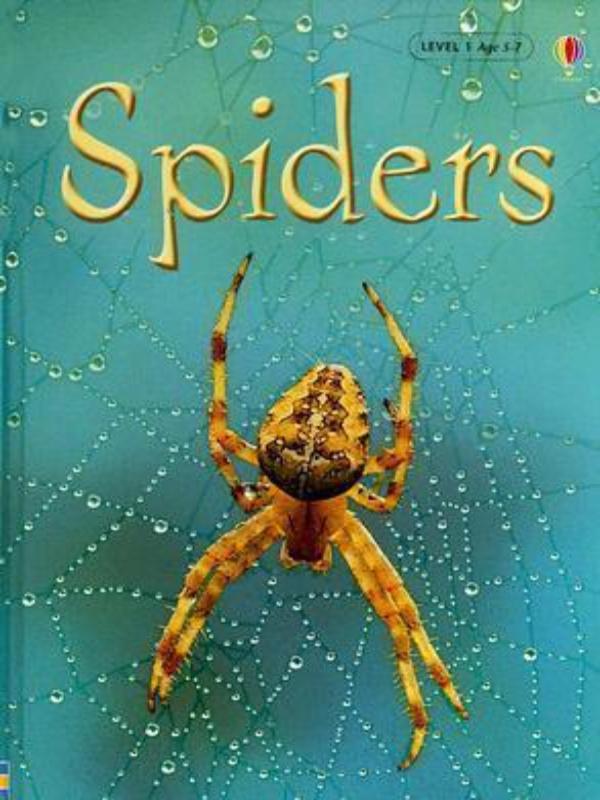 SPIDERS BEGINNERS