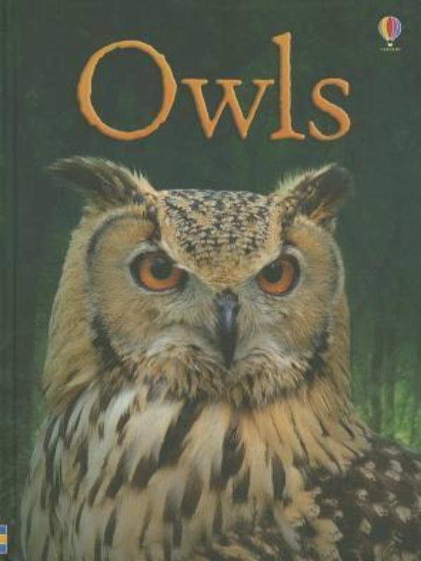 OWLS BEGINNERS