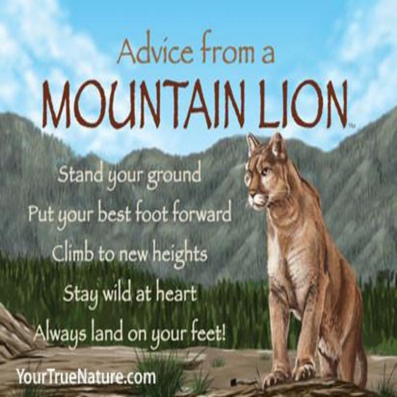 ADVICE MOUNTAIN LION MAGNET,MGADVMLION6